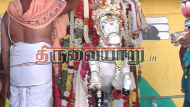 Photo of Thirumazhapadi Nandi Kalyanam 2015 Gallery