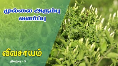 Photo of How to grow Mullai Flower and get benefitted from it – Vivasayam #3