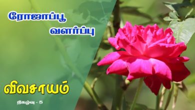 Photo of How to grow Rose Flower Plant and get benefitted from it – Vivasayam #5
